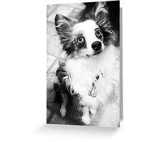 Favorite Picture of Louie. Greeting Card