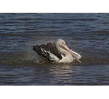 Pelican Bath Photographic Print