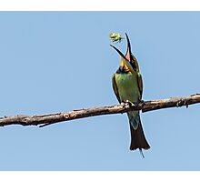 Catch of the Day Rainbow Bee Eater Photographic Print