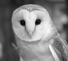 Curious Barn Owl (b&w) by hummingbirds