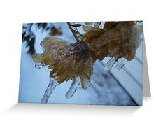 Ice Covered Flowers Greeting Card