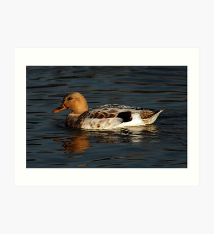 Duck - Sugarhouse Park, Utah Art Print