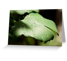Ginkgo Greeting Card