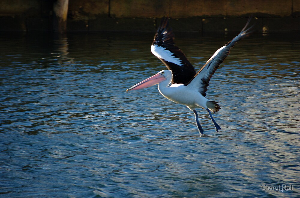 Vertical Take Off by Cheryl Hall
