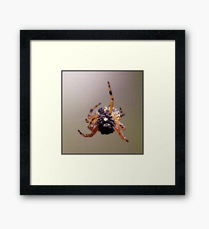 Web Master Framed Print
