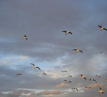 torquay seagull attack by melindapoll