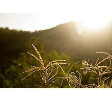 Afternoon Sunlight Photographic Print