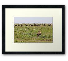 Hyena Buffet Framed Print