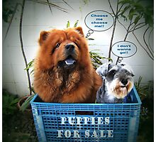 Puppies For Sale Photographic Print