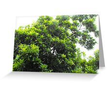 Sapodilla Tree Top Greeting Card