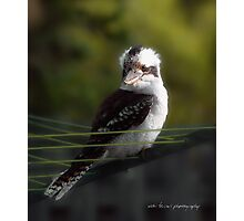 Kookaburra Hoists on the Hills © Vicki Ferrari Photography Photographic Print