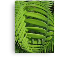 Cycad sphere Canvas Print