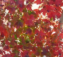 Autumn leaves bright by Marilyn Baldey