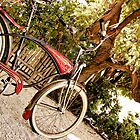 Bicycle by gregneedham