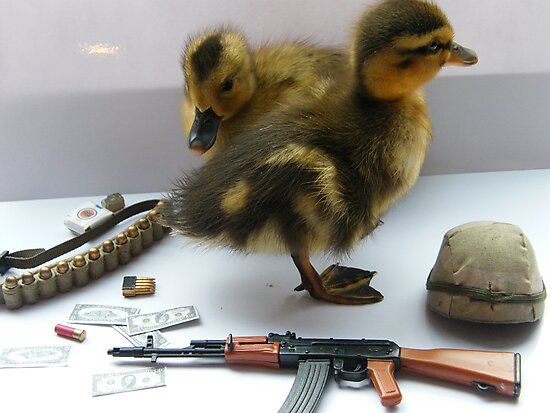 duck army by darren  shaw