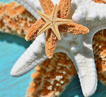 Starfish Stack by carolmcgunagle