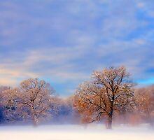 Morning Mist by Roger Maynard