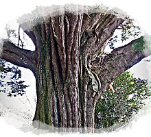 Sally & I really love nature, & looking at Trees is also a past time of mine. by Malcolm Chant