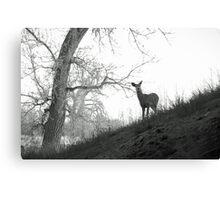 Cherry Creek Wilderness  Canvas Print