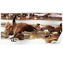 Geese On Ice Poster
