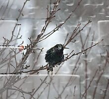 Starling In Winter by Deborah  Benoit