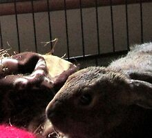 Baby Wombat sleeping by bibblesbunnies