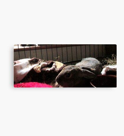 Baby Wombat sleeping Canvas Print