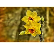 Early Blooms Photographic Print
