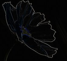"Glowing Edges ""Poppy of Delight"" by Laurie Puglia"