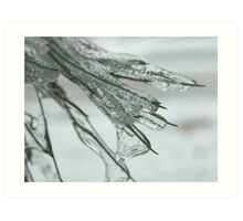 Frozen Needles Art Print