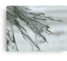 Frozen Needles Canvas Print