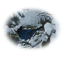 Bluejay In The Snow Photographic Print