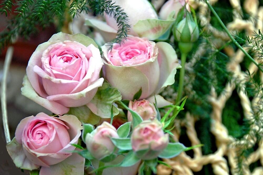 Pink roses by Arie Koene