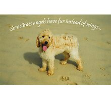 Sometimes Angels Have Fur Photographic Print