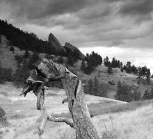 Mesa Trail Boulder, Colorado by Paul Crossland