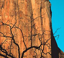 EL CAPITAN, SUNSET by Chuck Wickham