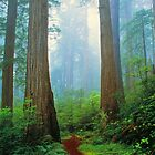 REDWOOD  FOREST by Chuck Wickham