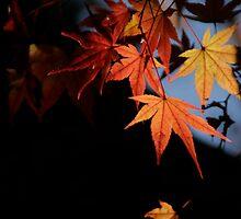 Leaves by Herman Lim