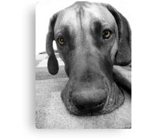 Big Dog with Brown Eyes Canvas Print