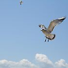 Flight of the Seagull! by Linda Jackson