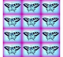 purple and blue butterflies Photographic Print