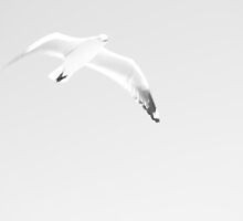 surreal seagull by jess974