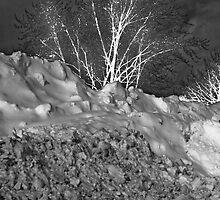 Winter Growth B&W by andapanda