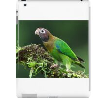 Brown-hooded parrot - Costa Rica iPad Case/Skin