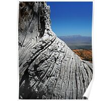 View of Bryce Canyon over Tree Trunk Poster