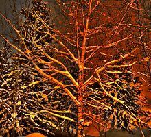 Winter trees in snow by Jeanne Frasse