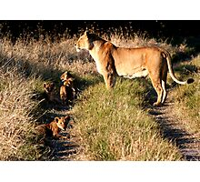 Lioness with cubs Photographic Print