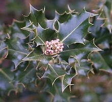 The Buds of Xmas by Peterzphotoz
