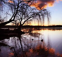 Mannum Willows by Steve Chapple
