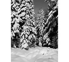 Deep in Dorchester Woods Photographic Print